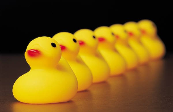 Image result for get your ducks in a row