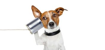 Consistent, Clear Communication: A Powerful Tool for Action-Driven Leaders