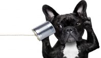 Listening leads to results for credit unions