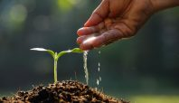 Grow your own credit union talent