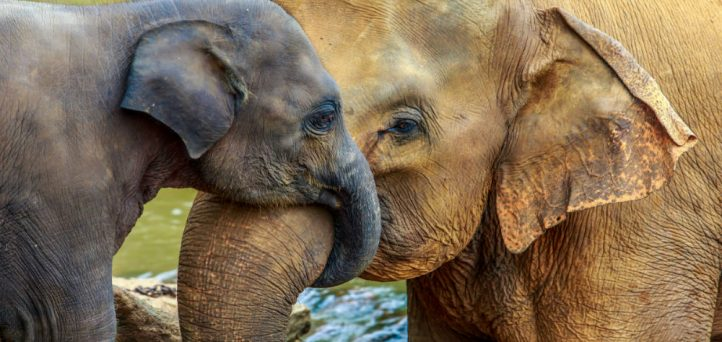 It's time to talk about the elephant in the room