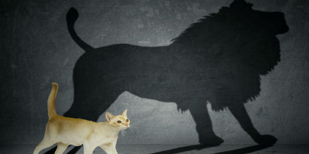two charismatic leaders Charismatic women leaders exist it is just that women have found it harder to balance the two aspects of charismatic leadership: competence + warmth, says this post.