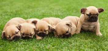 Are you spending too much on pet food?