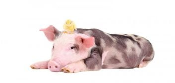 Will your credit union be the chicken or the pig?