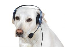 4 jobs that put your pet to work