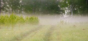 Navigating safely through the fog