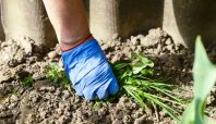 Keeping your strategic plan out of the weeds