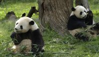 How a lost Panda explains benefits over features