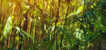 NCUA & FinCEN issue additional guidance on hemp banking
