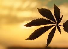 Defining cannabis customers