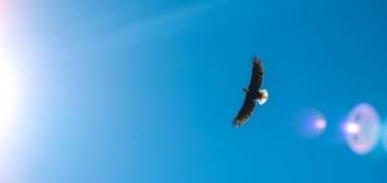 Help members soar, not simply survive