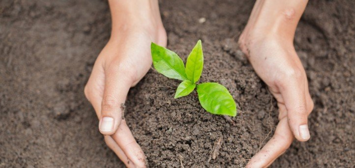 Planting trees and strategic plans at your credit union