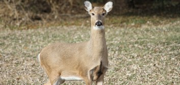 Q&A: Steering clear of 'deer in the headlights' syndrome