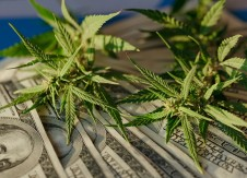 A conversation with Cole Saini: What to look for in a cannabis banking partner