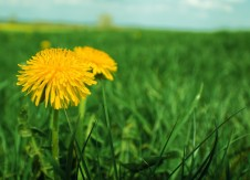In 2021, will your credit union grow wishes or weeds?