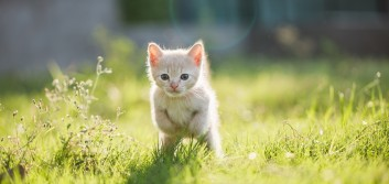 """We're not """"kitten"""" about transformation"""